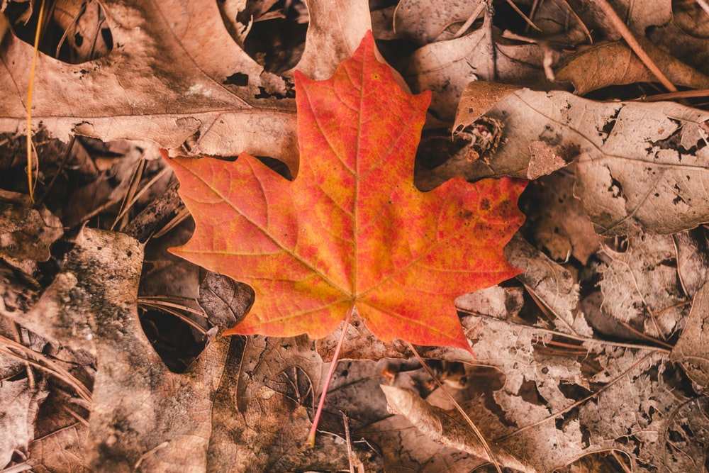 Autumn Leaf Reflection